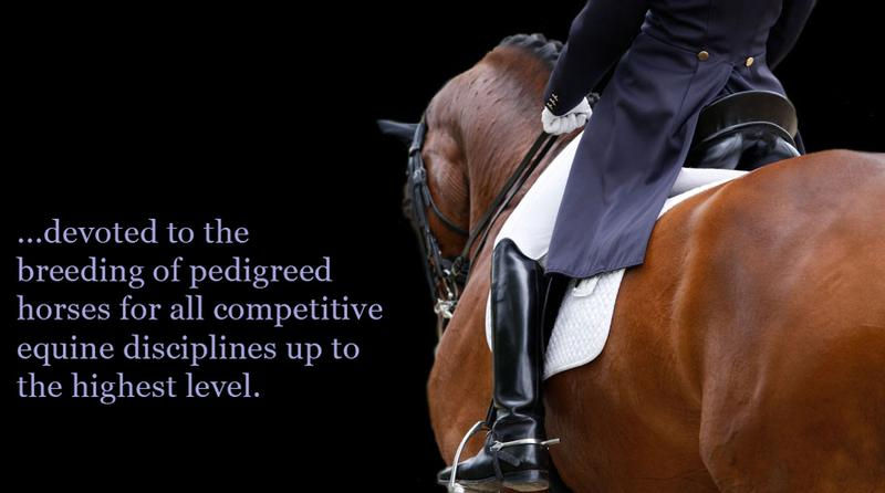 warmblood breeders society studbook uk stallions | British